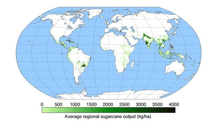 producing area of sugarcane