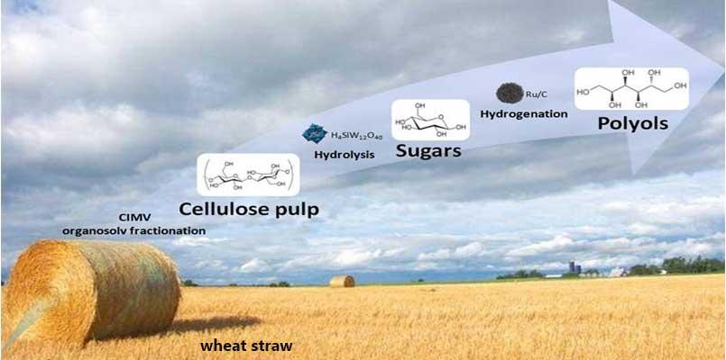 wheat straw pulp making