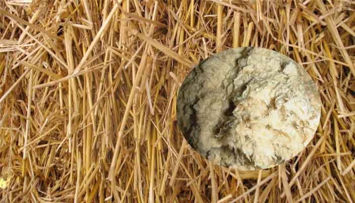 wheat straw pulp