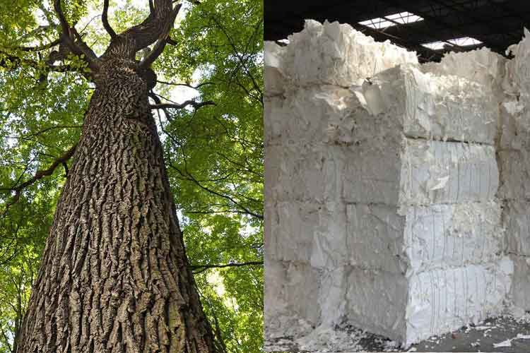 Comparison Of Softwood Pulp And Hardwood Pulp Paper Pulp Mill