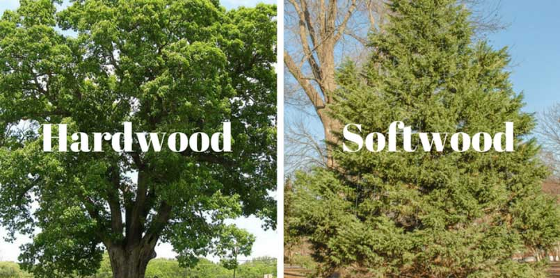 softwood pulp and hardwood pulp