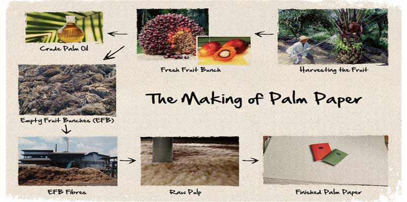 palm pulp making